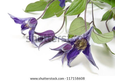 beautiful flowers in close-up shot on a white background - stock photo