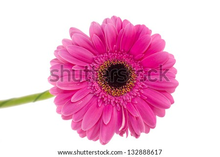 beautiful flowers in close-up shot on a white background
