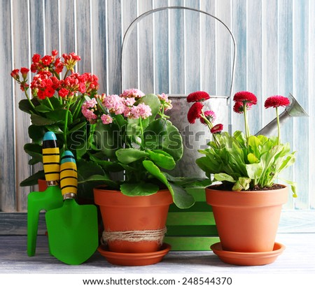Beautiful flowers in flowerpots, on wooden background - stock photo