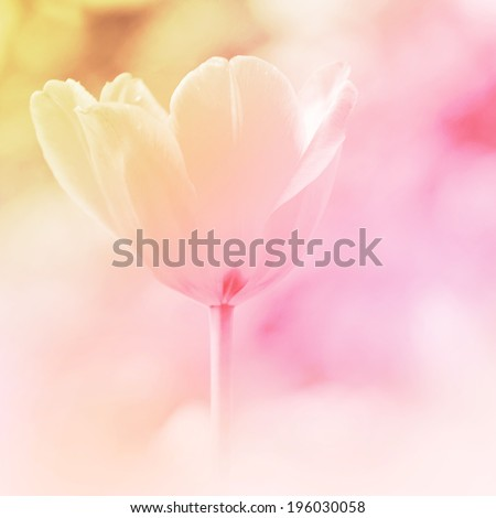 Beautiful flowers in soft focus with color filtered image, nature background. - stock photo