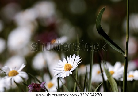 Beautiful flowers in spring - stock photo
