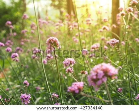 Beautiful flowers in the garden with sunlight in early morning. - stock photo