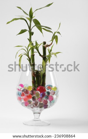 Beautiful flowers in vases with hydrogel - stock photo