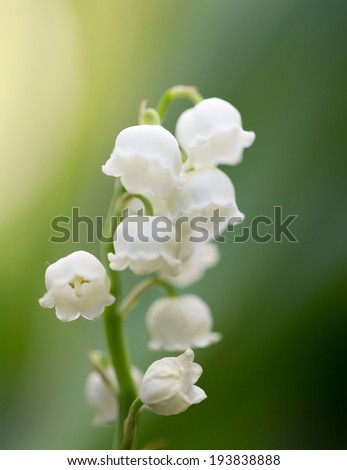 Beautiful flowers lily of the valley on the nature