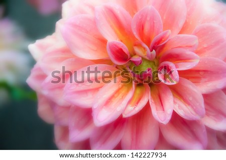 beautiful flowers made soft filters - stock photo