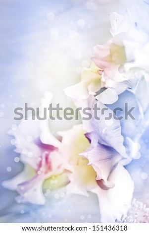 beautiful flowers made with color filters/  - stock photo