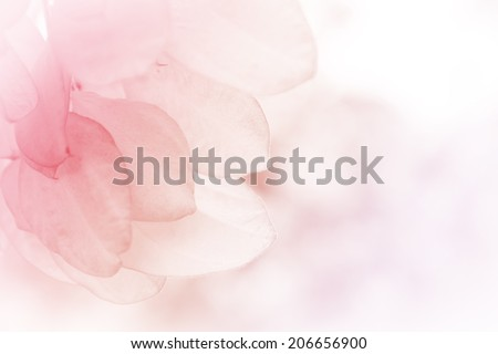 beautiful flowers made with color filters abstract - stock photo