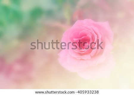 beautiful flowers made with color filters, Blur pink rose - stock photo