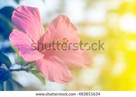beautiful flowers made with color filters for background