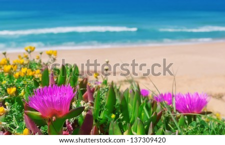 Beautiful flowers on a background of the sea. Close-up. - stock photo