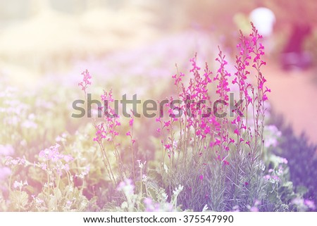 beautiful flowers on field made with color filters. - stock photo