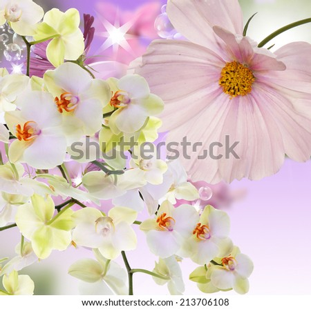 Beautiful flowers Orchid.Floral card - stock photo
