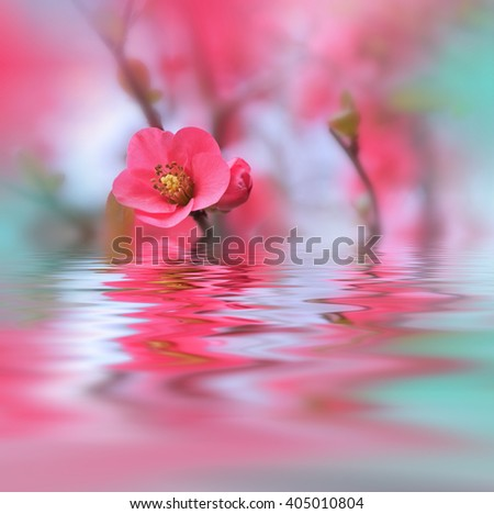Beautiful  flowers reflected in the water, spa concept. - stock photo
