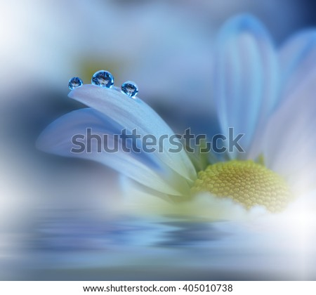 Beautiful  flowers reflected in the water, spa concept.Postcard. Blue Background. - stock photo