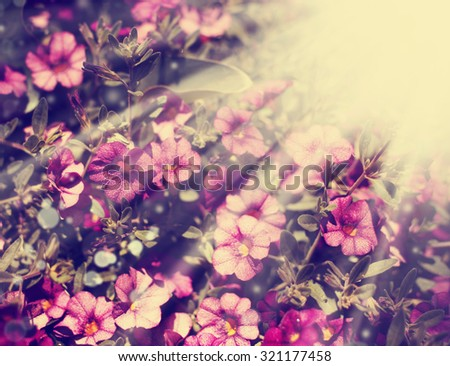 Beautiful flowers with the leaves in the sunshine, vintage retro hipster image with summer bloom. Autumn pink flowers - stock photo