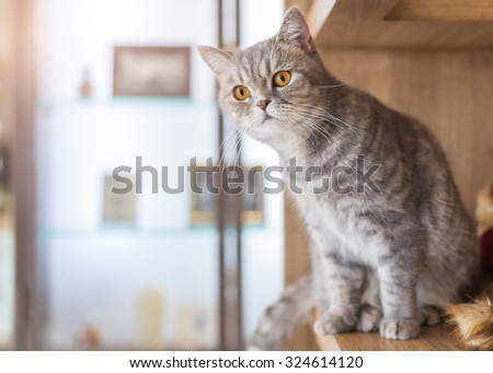beautiful fluffy cat looking outside at house  - stock photo