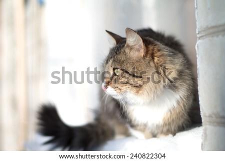 beautiful fluffy cat on a windowsill in winter - stock photo