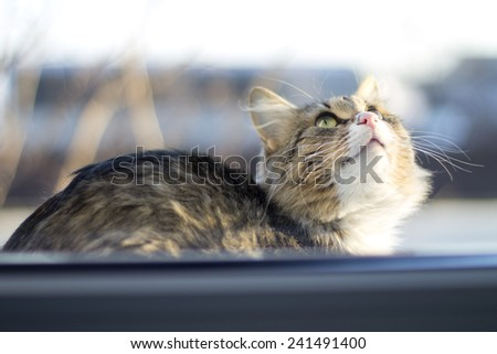 beautiful fluffy cat sits on the windowsill in the winter - stock photo