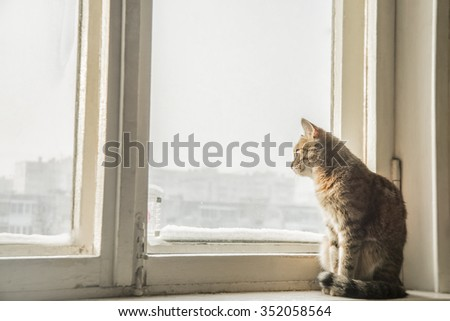 beautiful fluffy cat sits on the windowsill in the winter. portrait of young  cat near window with frost and snow - stock photo