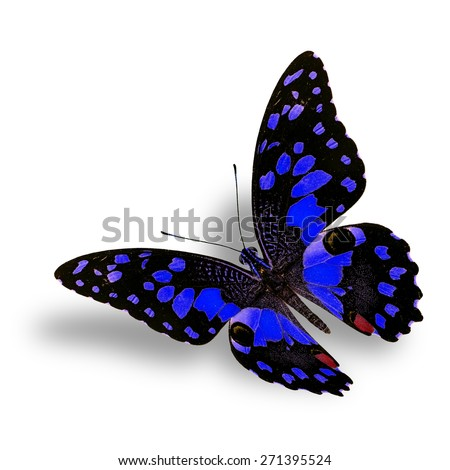 Beautiful Flying blue butterfly isolated on white background with nice soft shadow beneath - stock photo