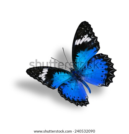 Beautiful Flying  Blue Butterfly (Leopard Lacewing) with soft shadow beneath on white background - stock photo