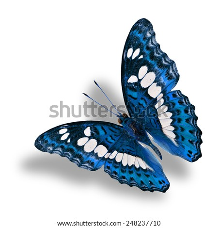 Beautiful flying blue butterfly on white background with soft shadow beneath - stock photo
