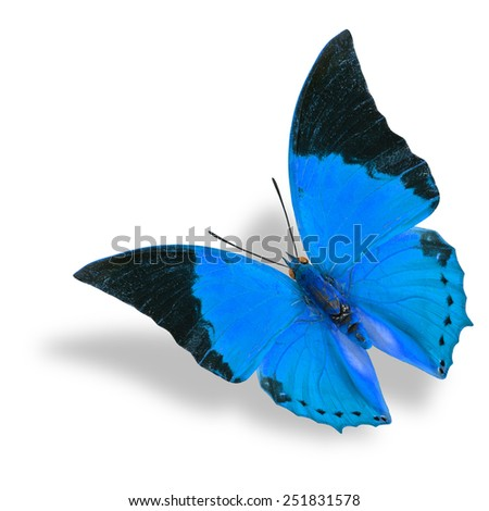 Beautiful flying blue butterfly (Tawny Rajah) on white background with soft shadow - stock photo