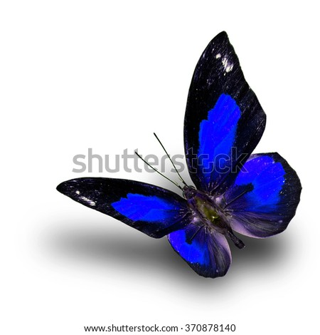 Beautiful flying blue butterfly, the Bright Sunbeam or Malayan Sunbeam butterfly in fancy color with shadow beneath on white background - stock photo