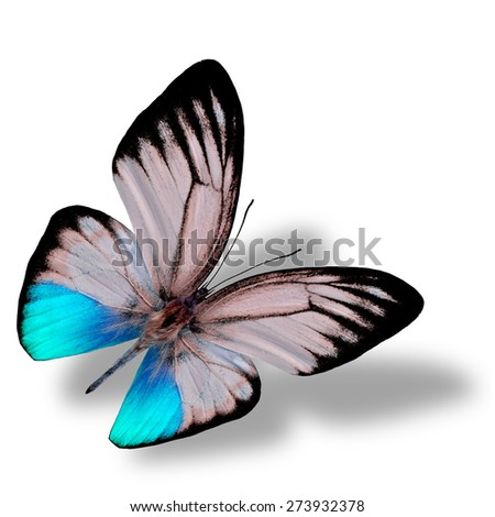 Beautiful flying blue butterfly, the orange gull butterfly in fancy color profile on white background with nice soft shadow beneath - stock photo