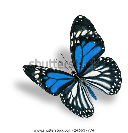 Beautiful flying blue butterfly, white tiger in fancy color profile, with soft shadow beneath - stock photo
