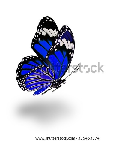 Beautiful flying blue butterfly with soft shadow beneath on white background - stock photo