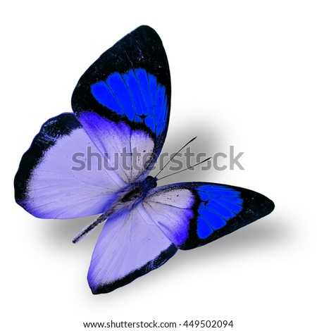 Beautiful flying blue butterfly, yellow orange tip butterfly in fancy color transparency with soft shadow beneath - stock photo