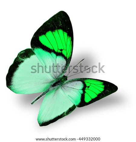 Beautiful flying bright green butterfly, yellow orange tip butterfly in fancy color transparency with soft shadow beneath - stock photo