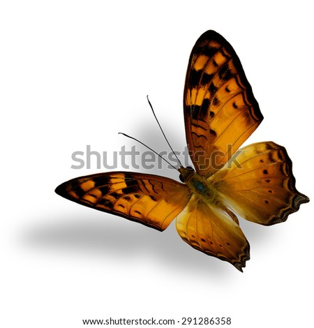 Beautiful flying butterfly, The Vagrant Butterfly stretches its back wings profile in natural color isolated on white bacground with soft shadow beneath - stock photo