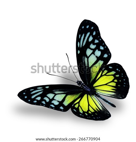 Beautiful Flying Butterfly, the Yellow Glassy Tiger on white background with soft shadow beneath - stock photo
