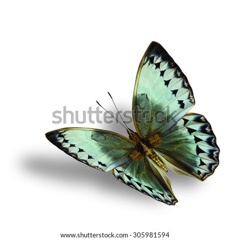 Beautiful Flying Cambodia Junglequeen butterfly on white background with soft shadow beneath - stock photo