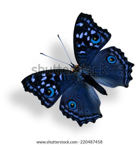 Beautiful Flying Fancy Blue Butterfly (Grey Pansy) isolated on white with soft shadow beneath - stock photo