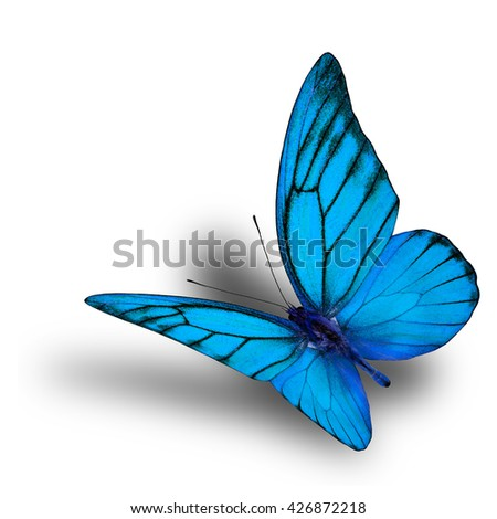 Beautiful flying fancy pale blue butterfly isolated on white background with soft shadow beneath - stock photo