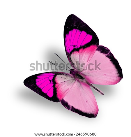 Beautiful flying fancy pink butterfly (orange tip butterfly), with soft shadow beneath - stock photo