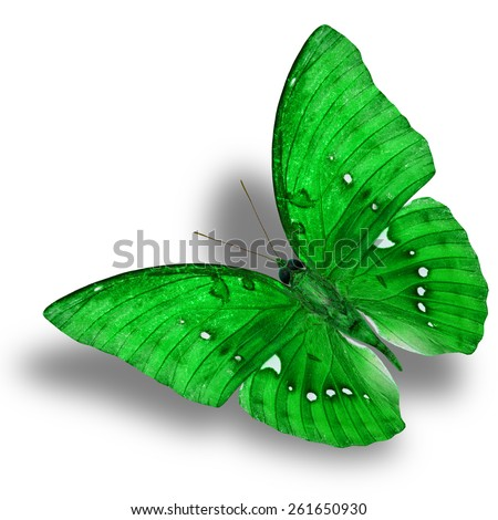 Beautiful Flying Green Butterfly (Great Marquis) with nice shadow beneath isolated on white background - stock photo