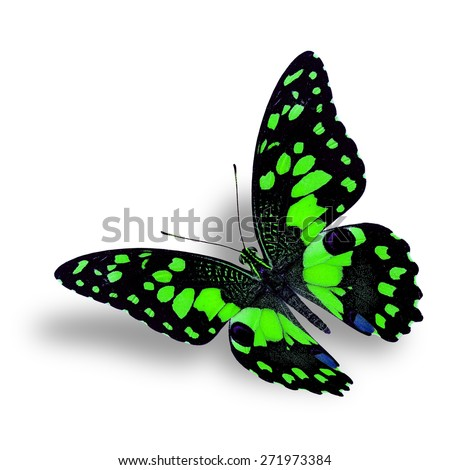 Beautiful Flying green butterfly isolated on white background with nice soft shadow beneath - stock photo