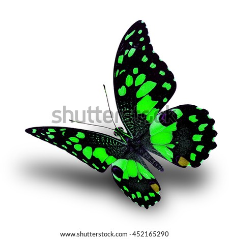 Beautiful flying green butterfly, Lime butterfly (Papilio demoleus) in fancy color profile on white background with soft shadow beneath - stock photo