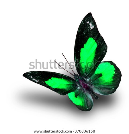 Beautiful flying green butterfly, the Bright Sunbeam or Malayan Sunbeam butterfly in fancy color with shadow beneath on white background - stock photo