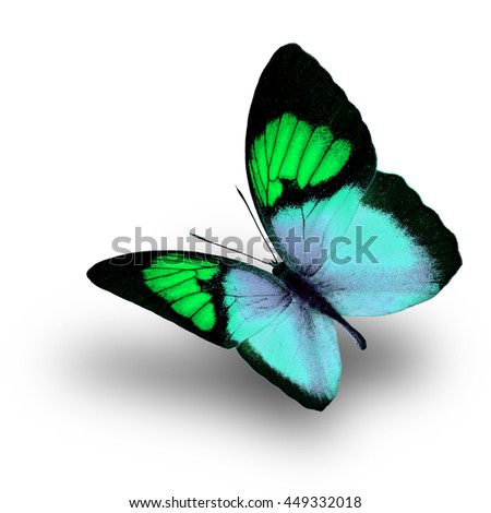 Beautiful flying green butterfly, the Yellow Orange Tip (Ixias pyrene) in fancy color profile on white background with soft shadow beneath - stock photo