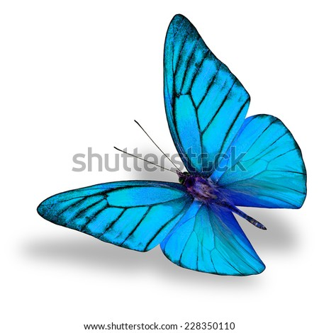 Beautiful Flying Light Blue butterfly (Appais Nero) in fancy color profile in natural color isolated on white background with soft shadow beneath - stock photo