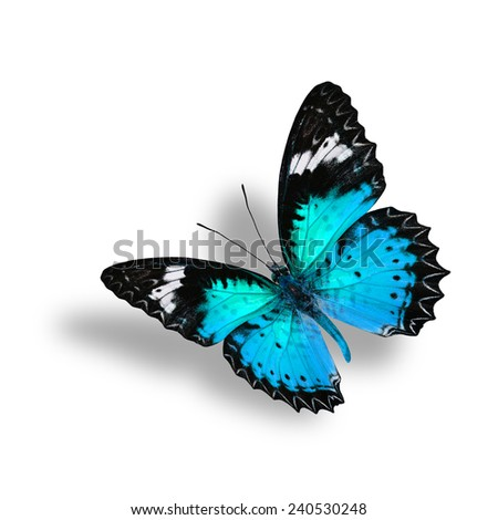 Beautiful Flying Light Blue Butterfly (Leopard Lacewing) with soft shadow beneath on white background - stock photo