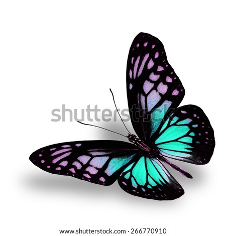 Beautiful Flying Light Green Butterfly on white background with soft shadow beneath - stock photo