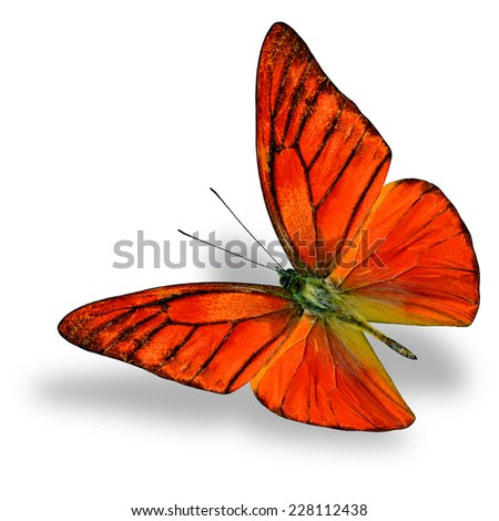 Beautiful flying Orange Albatross butterfly (Appais Nero) upper wing profile in natural color isolated on white background with soft shadow beneath - stock photo
