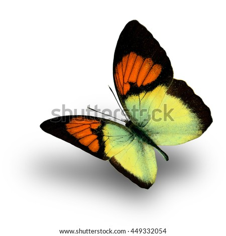 Beautiful flying orange butterfly, the Yellow Orange Tip (Ixias pyrene) in fancy color profile on white background with soft shadow beneath - stock photo