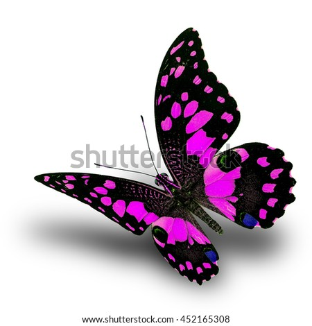 Beautiful flying pink butterfly, Lime butterfly (Papilio demoleus) in fancy color profile on white background with soft shadow beneath - stock photo